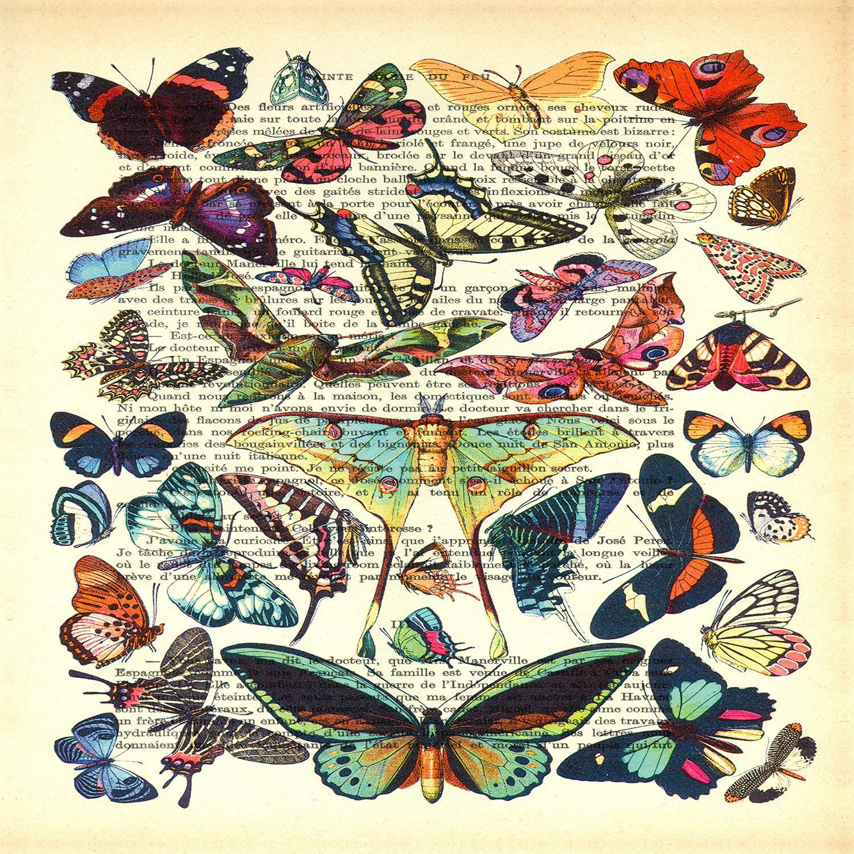 DiaNoche Designs Artist | Madame Memento - Butterflies Collection