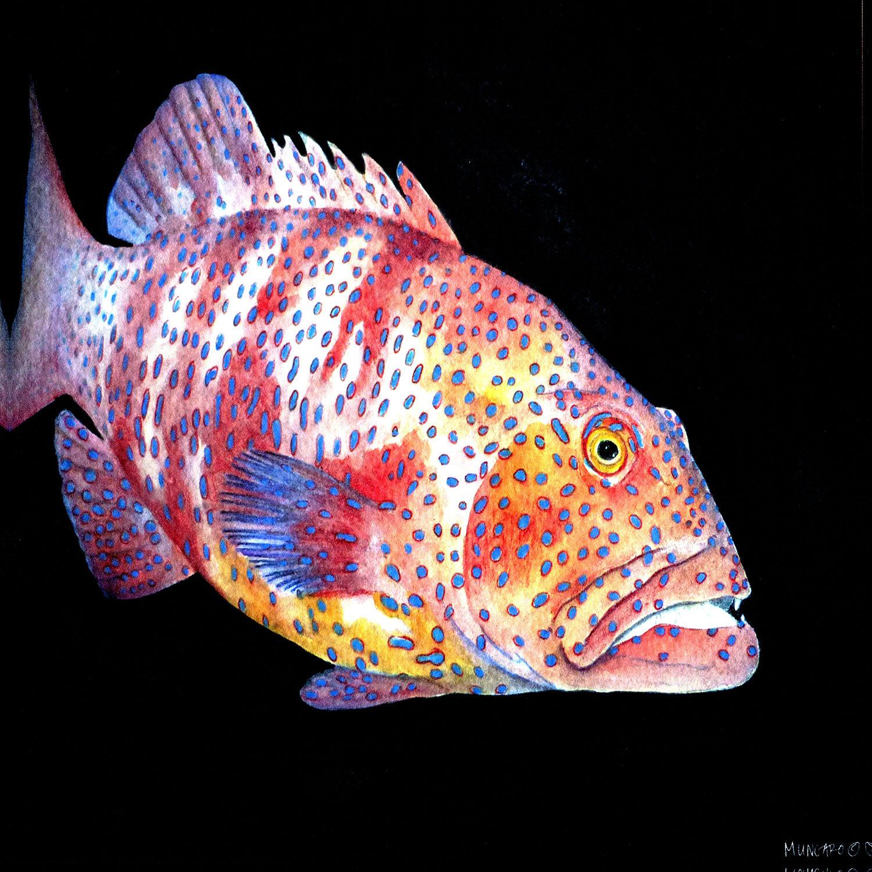 DiaNoche Designs Artist   Marley Ungaro - Deep Sea Life - Grouper Fish