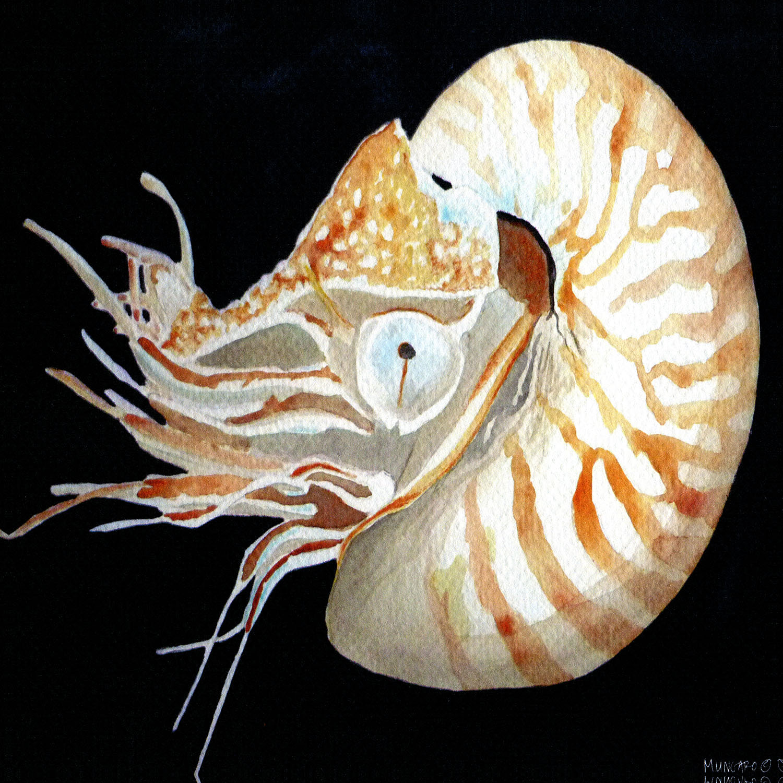 DiaNoche Designs Artist   Marley Ungaro - Deep Sea Life - Nautilus