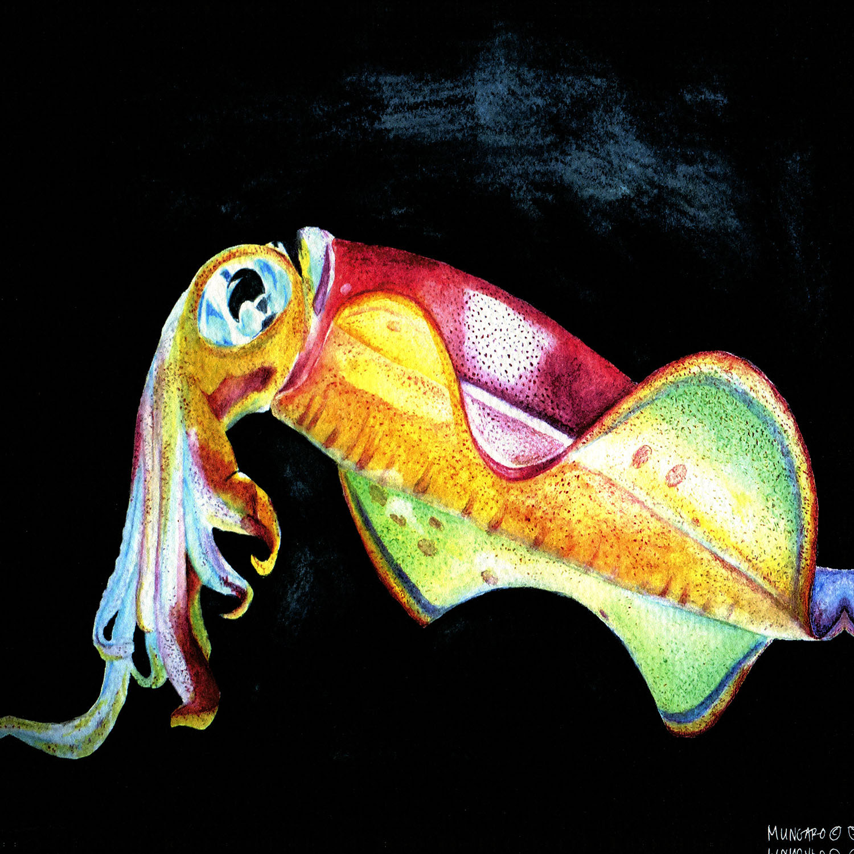 DiaNoche Designs Artist   Marley Ungaro - Deep Sea Life - Squid