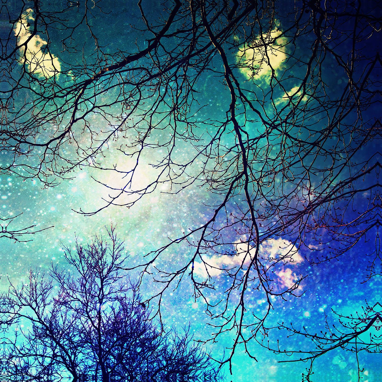 DiaNoche Designs Artist | Sylvia Cook - Night Sky